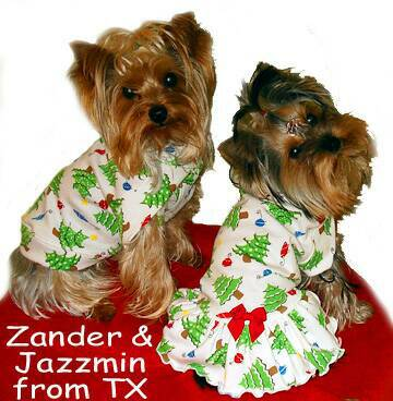 Christmas Trees and Ornaments on White Knit Zander in    , Jazzmin in dress