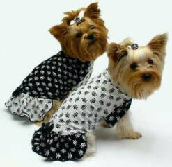 Black and White Skulls dog clothes