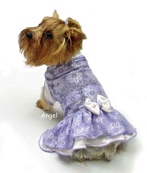 purple daisey mesh dog clothes