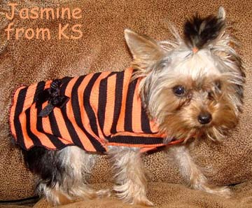 Halloween shirt dog clothes