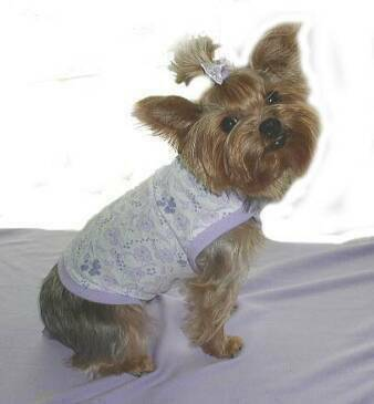 purple lilac pansies dog clothes