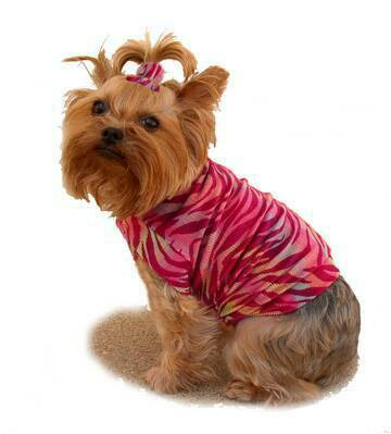 Marron Rainbow Velvet Zebra dog clothes
