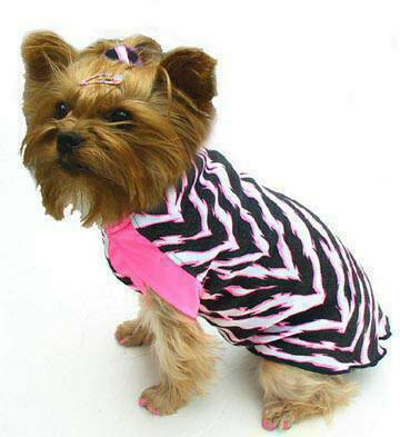 Zebra with Pink in Girl Shirtwith pink trim